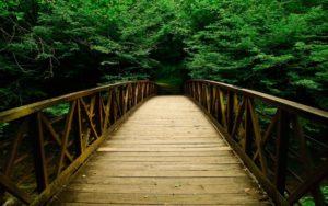 The Bridge to Video Enlightenment